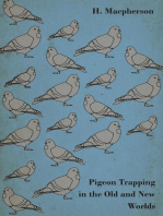Pigeon Trapping in the Old and New Worlds