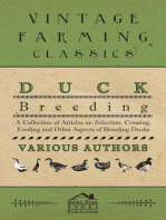 Duck Breeding - A Collection of Articles on Selection, Crossing, Feeding and Other Aspects of Breeding Ducks