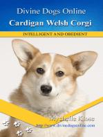 Cardigan Welsh Corgi
