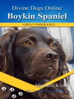 Boykin Spaniel