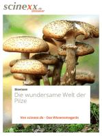 Die wundersame Welt der Pilze