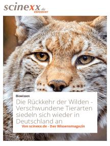Die Rückkehr der Wilden: Verschwundene Tierarten siedeln sich wieder in Deutschland an
