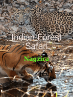 Indian Forest Safari - Nagzira