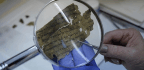 Experts Suspect New Dead Sea Scroll Fragments Are Fake