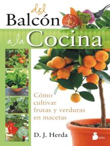 Del balcón a la cocina: Cómo cultivar frutas y verduras en macetas