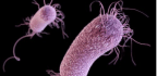 Bacteria Send Electrical Pulses as Recruitment Ads