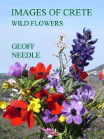 Images of Crete - Wild Flowers