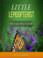 Little Lepidopterist
