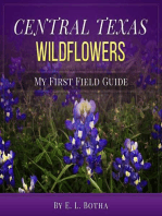 Central Texas Wildflowers