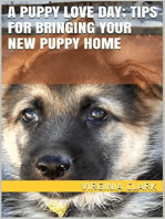 A Puppy Love Day; Tips for Bringing Your New Puppy Home