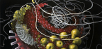 """Molecular Still Lives"" Show the Science in Our Food in Us"