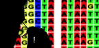 Is DNA the Language of the Book of Life?