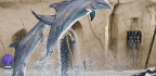 Do Dolphins Have Conversations? We Still Can't Say