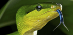How Animals Use Smell to Send Coded Messages