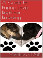 A Guide to Puppy Love