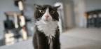 Cat Poop Parasites Don't Actually Make You Psychotic