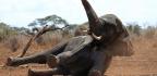 Wild Elephants Sleep Just Two Hours a Night