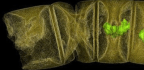 Introducing the World's Oldest Plant-Like Fossil