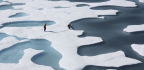 Sea Ice Retreat Could Lead to Rapid Overfishing in the Arctic