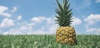 Popular Foods That Grow in Somewhat Startling Ways