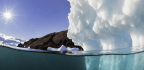 The Race to Safeguard the Arctic's Natural Heritage