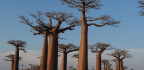 There Are 60,000+ Species Of Tree Worldwide, Scientists Say