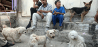 Iraq's Unlikely Love Affair With Cuddly Canines