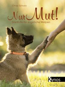 Nur Mut!: Starthilfe für ängstliche Welpen