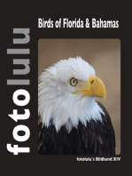 Birds of Florida & Bahamas