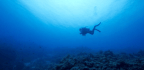 The Slow-Motion Bacteria Buried Deep in the Ocean's Floor