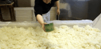 The Transformative Fungus That Powers Japanese Cuisine