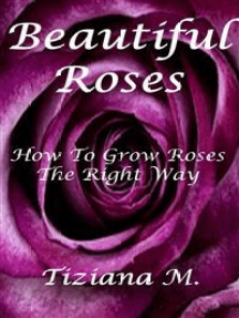 Beautiful Roses: How To Grow Roses The Right way