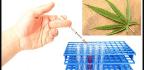Drug Testing for Welfare Recipients in Australia Raises Discrimination and Privacy Concerns