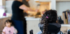 The Deportation Fears of Immigrants With Disabled Children
