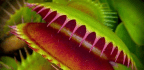 This Micro-Robot Mimics the Ingenious Grasp of a Venus Flytrap