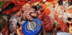 Mislabeling Means Consumers Eat a Lot of Imposter Fish