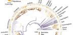 Bird Genes Confirm Hunch About New Species