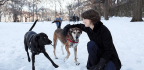 Learn To Sniff Like A Dog And Experience The World In A New Way