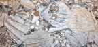 Lost Ecosystem Turns Up in Seafloor Mud