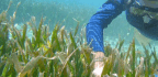 Coral Reefs Show Signs of Climate Stress, but There's Still Hope