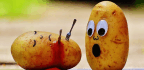 Eating Potatoes Won't Actually Kill You