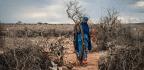 Photos Of Somalia