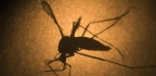Can Zika Infection Attack the Brains of Newborns? Scientists Head to Field for Answers