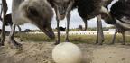 Why Are Bird Eggs Egg-Shaped? An Eggsplainer