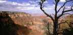 Grand Canyon Gives In to Creationist Suing for Religious Discrimination