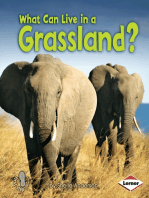 What Can Live in a Grassland?