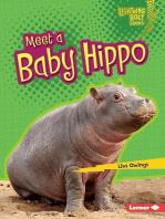 Meet a Baby Hippo