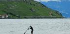Switzerland Puzzles Over Citizenship Test After Lifelong Resident Fails