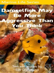 Damselfish May Be More Aggressive Than You Think