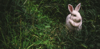 New Zealand Needs to Kill These Adorable Rabbits